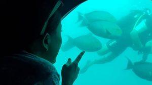 モルディブオプショナルツアー 潜水艦サブマリン
